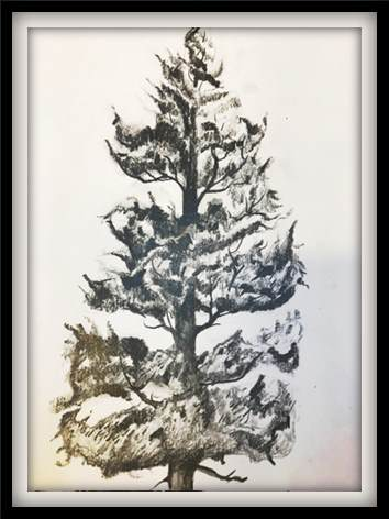 Complete guide to drawing a tree