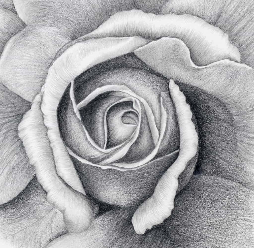 How To Draw A Flower In Charcoal