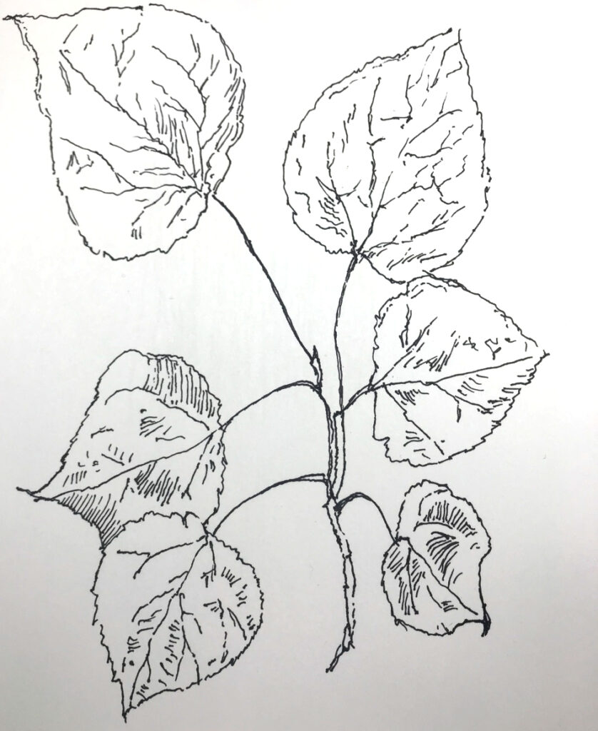 How to Draw a Tree Branch with Leaves