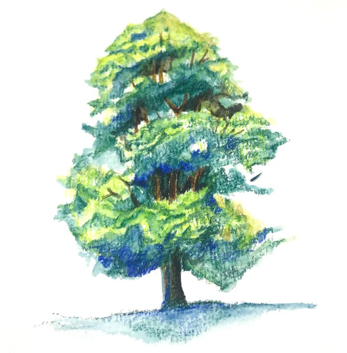 Drawing a Simple Tree