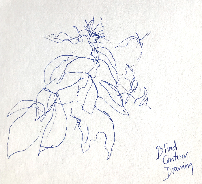 Blind Contour Fountain Pen Drawing
