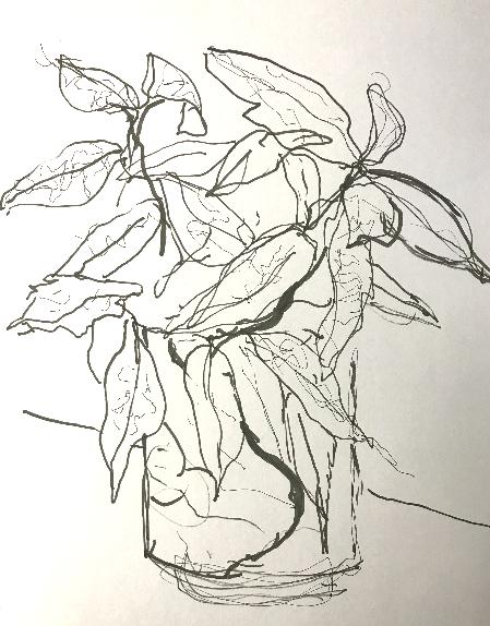 Still Life Continuous Sketch